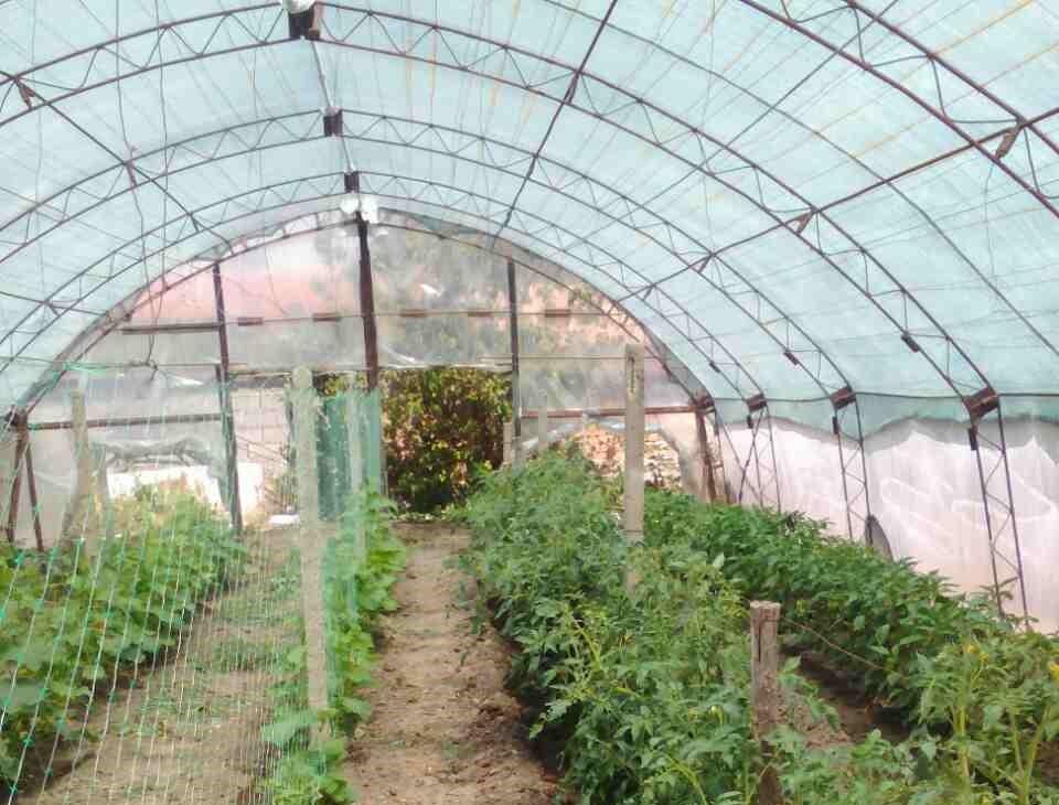Мрежа за сянка в оранжерия