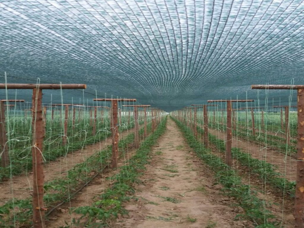 Засенчваща мрежа 30% за зеленчуци